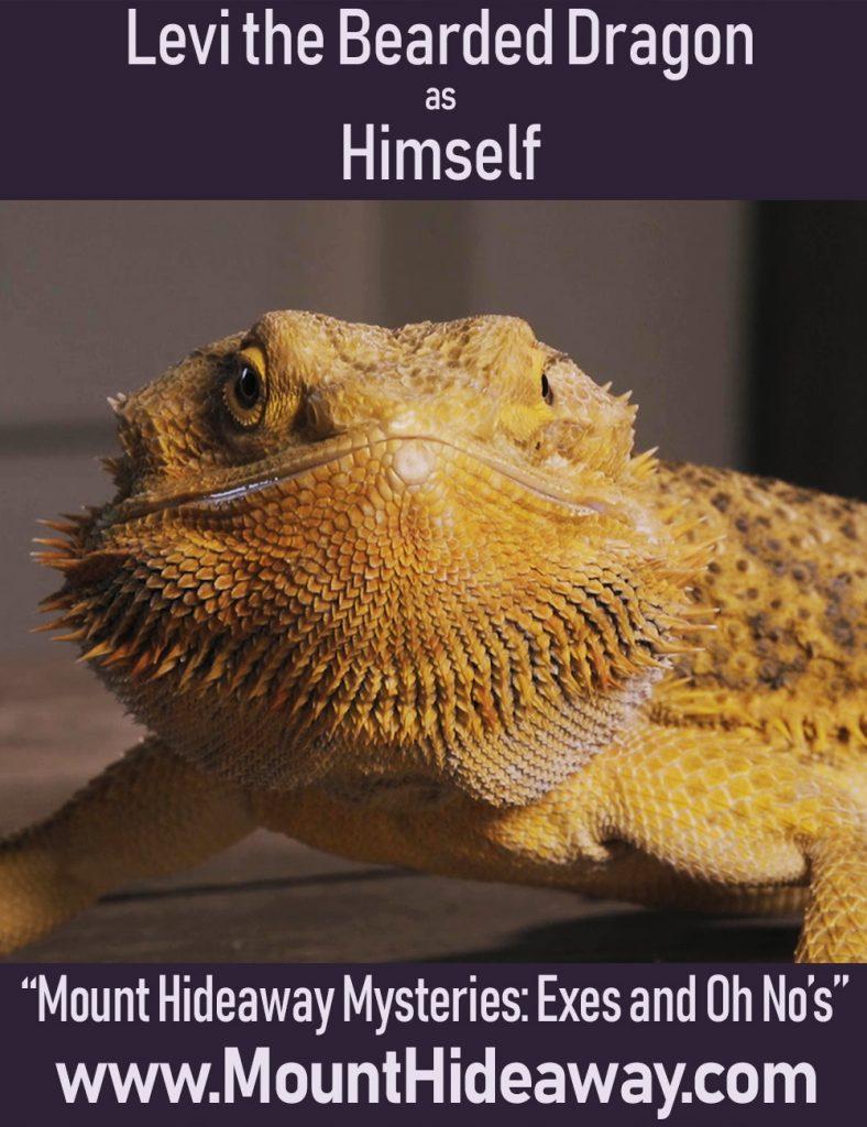 Levi the Bearded Dragon